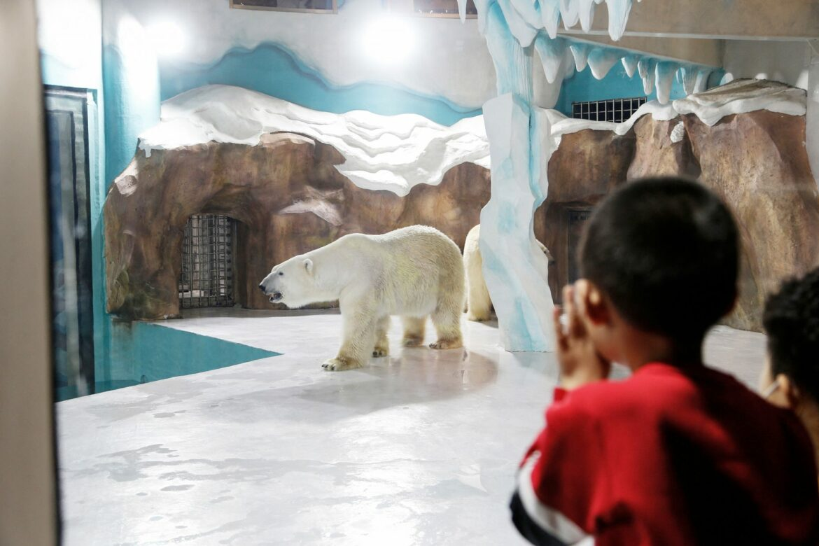 World's First 'Polar Bear Hotel' Opens in China to 'Very High' Bookings Despite Facing Criticism