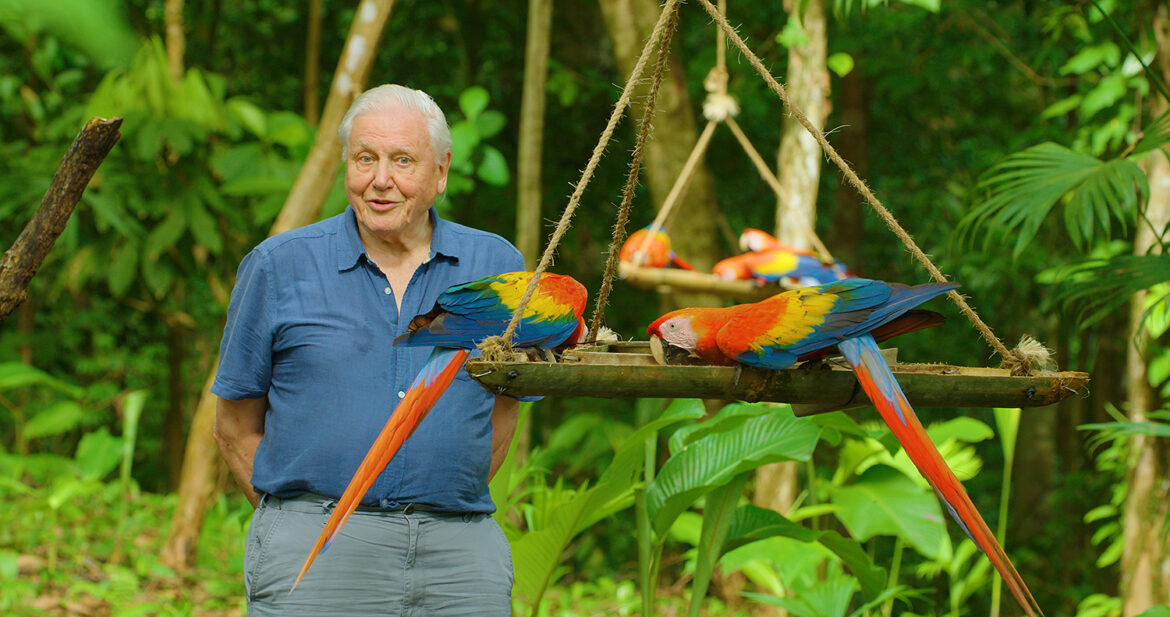 David Attenborough's New Netflix Show Will Explore the Amazing Ways Animals Use Color to Survive