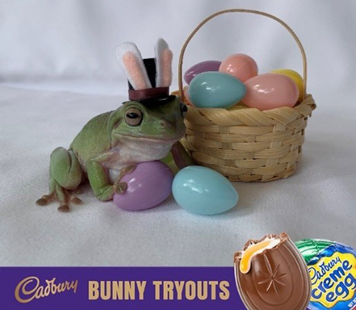 Betty the Frog Becomes the First Amphibian to Win the Cadbury Bunny Tryouts